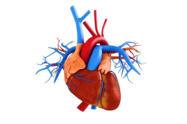 Коронарные артерии схема